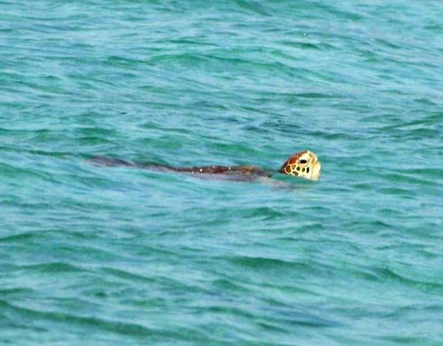 「夏の様相です!暑いです」:西表島・船浮だより②_c0014967_7224448.jpg