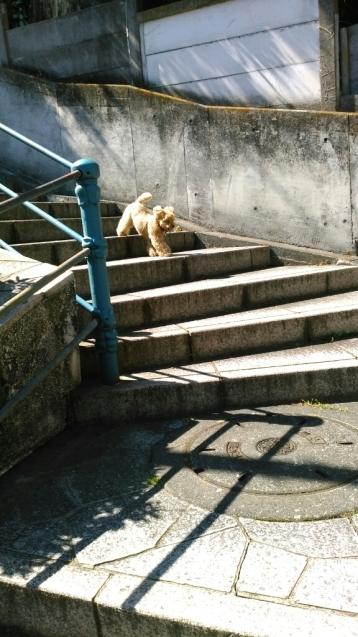 乙女山公園に散歩・・・続き1_c0162773_00324551.jpg