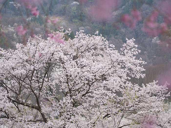 陸郷〜夢農場_c0085877_5421952.jpg