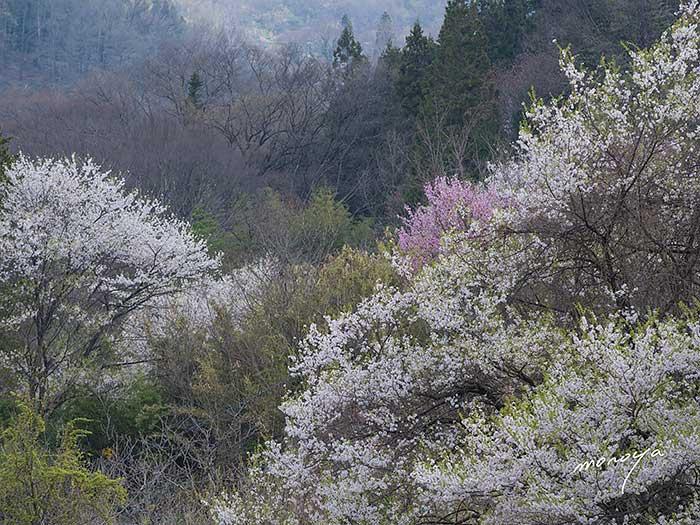 陸郷〜夢農場_c0085877_5423153.jpg