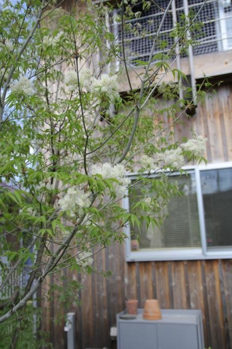 庭4年目。庭づくりをふりかえる①_e0375293_10061383.jpg