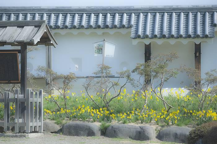 近辺の桜_c0077395_19472830.jpg