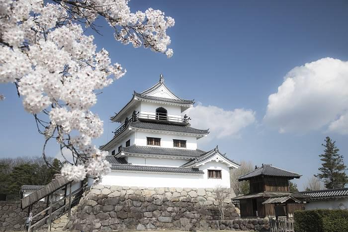 近辺の桜_c0077395_20494069.jpg