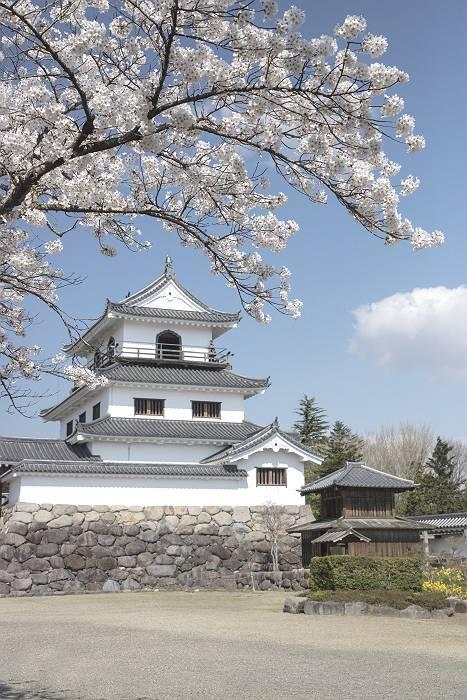 近辺の桜_c0077395_2061471.jpg