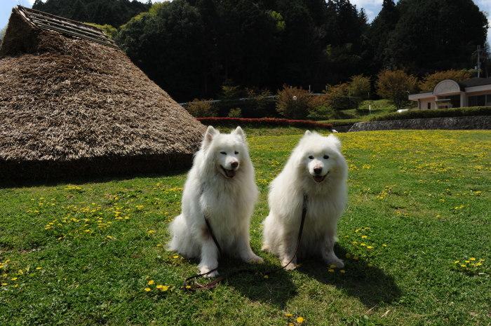 奈良でキャンプ~♪_a0049296_20493696.jpg