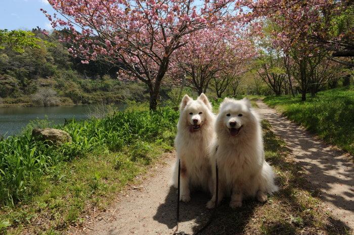 奈良でキャンプ~♪_a0049296_20502265.jpg