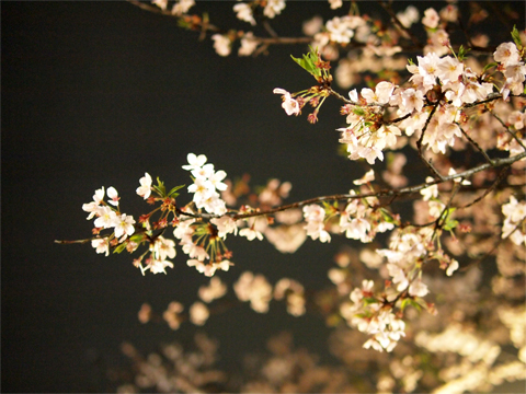 やっぱり花より団子_d0174704_1325537.jpg