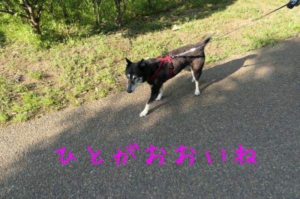 f0369014_13222087.jpg