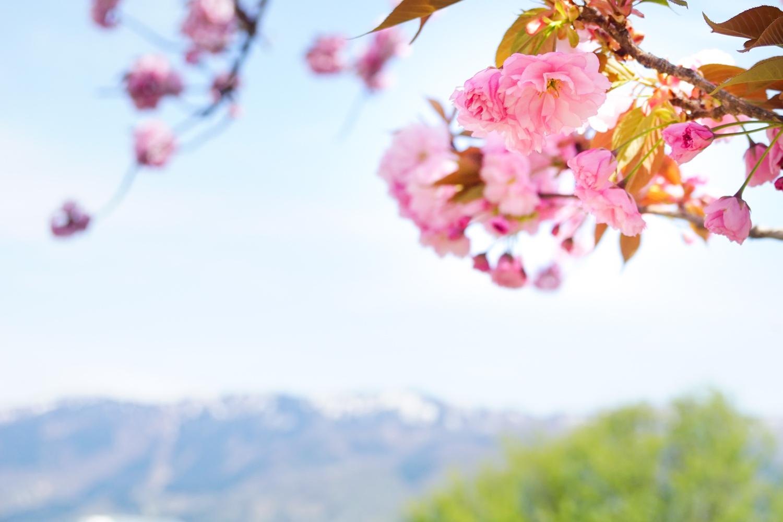 春の景 諸々_c0220824_17163316.jpg