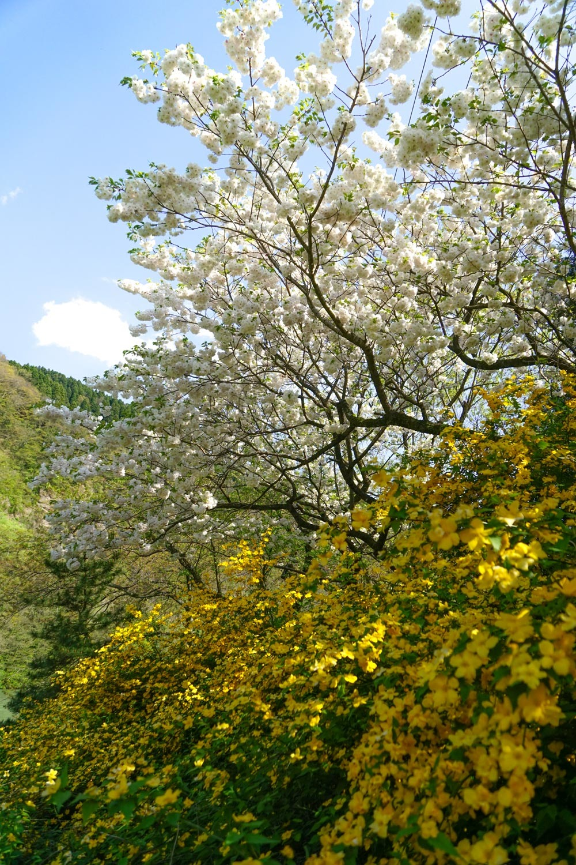 春の景 諸々_c0220824_17164385.jpg