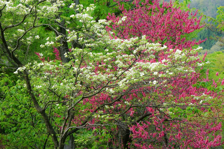 春の景 諸々_c0220824_17165290.jpg