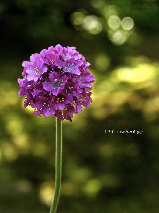 spring_f0315034_17084180.jpg