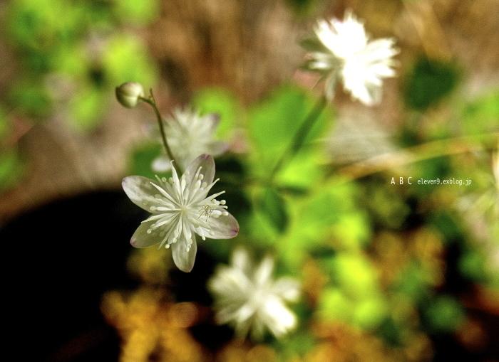 spring_f0315034_17104246.jpg
