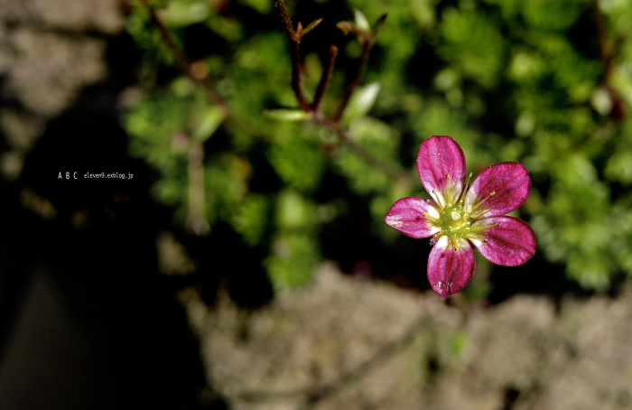 spring_f0315034_17164550.jpg