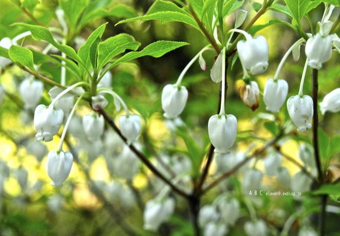 spring_f0315034_17171790.jpg