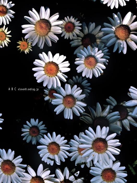 spring_f0315034_17172994.jpg