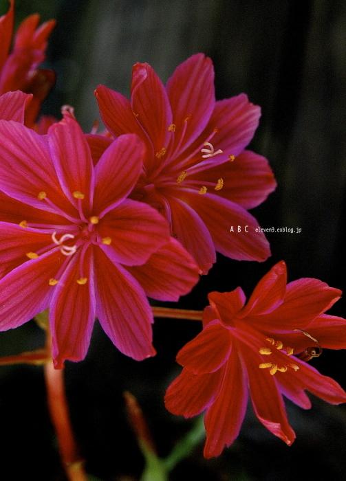 spring_f0315034_17181105.jpg
