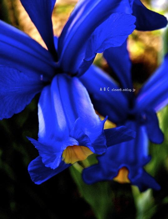 spring_f0315034_17184583.jpg