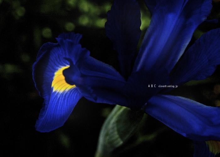 spring_f0315034_17185675.jpg
