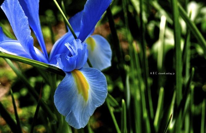 spring_f0315034_17191058.jpg