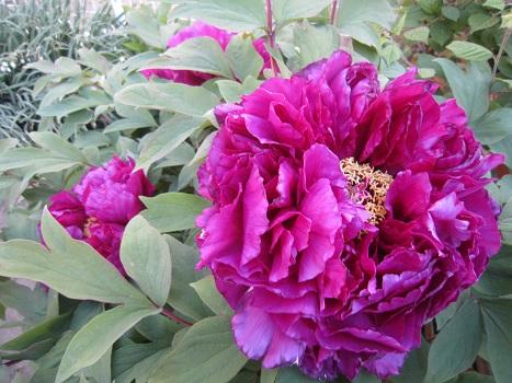 春の花が咲いています_b0177436_14572326.jpg