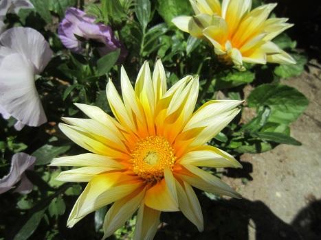 春の花が咲いています_b0177436_1512986.jpg
