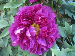春の花が咲いています_b0177436_15461783.jpg