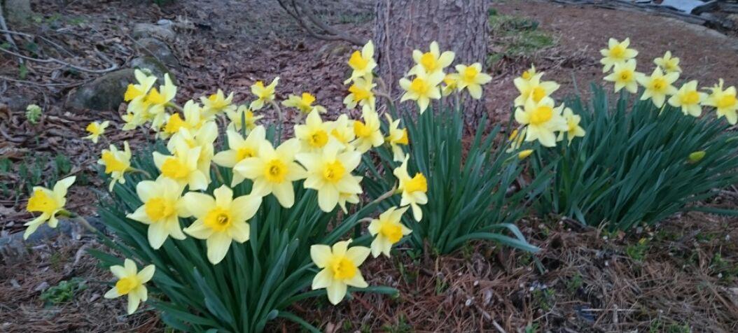 春が来た_f0081443_20204484.jpg