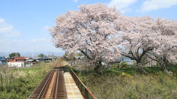 2017年 4月 樽見鉄道 春_d0202264_21374820.jpg