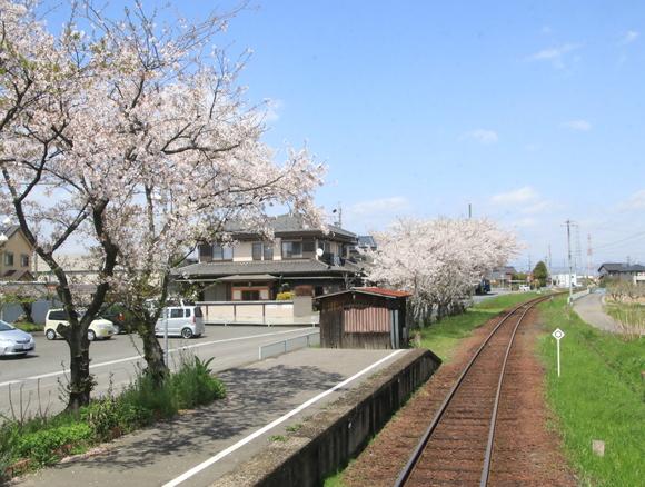 2017年 4月 樽見鉄道 春_d0202264_21383312.jpg
