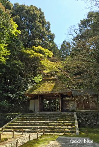 Kyoto trip  春の京都旅 洛東 _e0253364_20122491.jpg