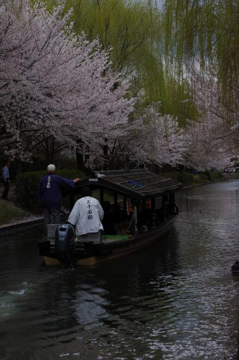 桜  2017  伏見 中書島界隈_f0021869_23452833.jpg