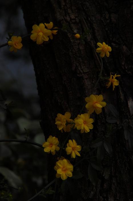 桜  2017  伏見 中書島界隈_f0021869_23455246.jpg