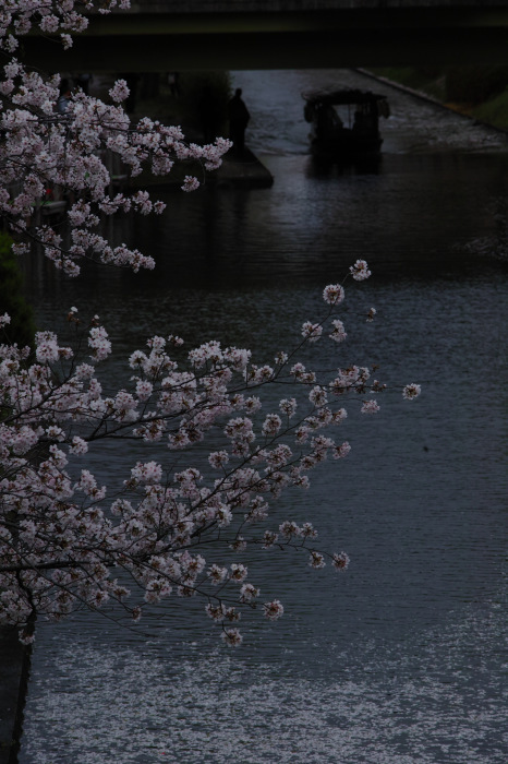 桜  2017  伏見 中書島界隈_f0021869_23461366.jpg