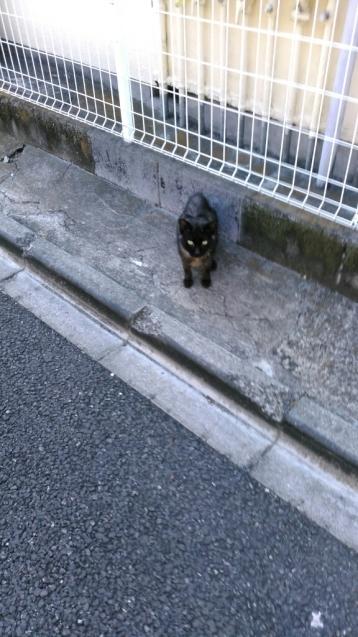 乙女山公園に散歩・・・続き2_c0162773_00095906.jpg