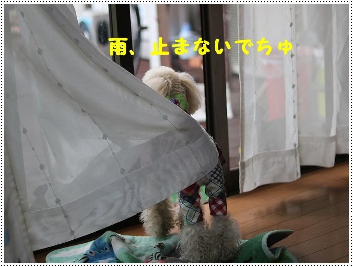 b0175688_20083504.jpg