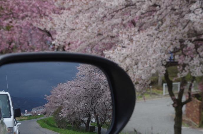 桜_f0163491_22441943.jpg