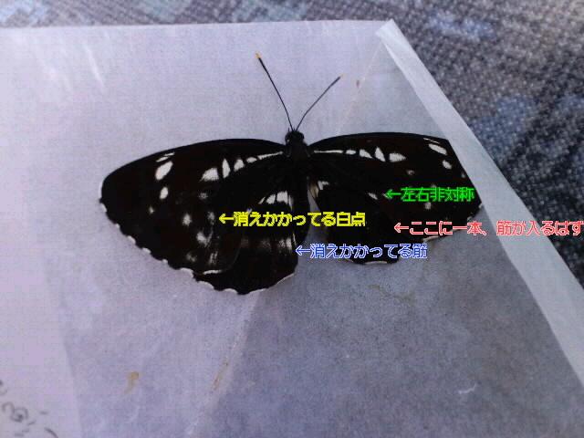 d0356192_23025244.jpg