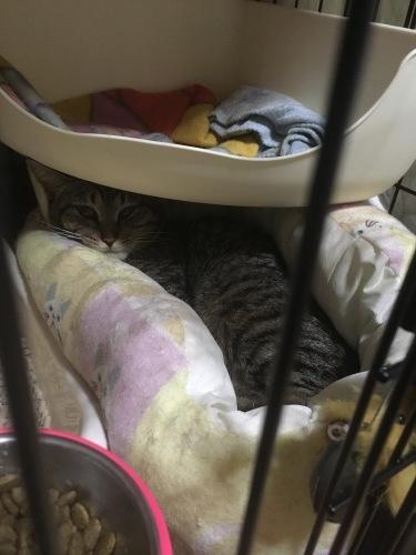 保護猫コロンちゃん、絶賛脱走中🏃♀️_d0179994_16131122.jpg