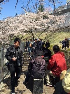 満開の桜_a0335202_17352657.jpg