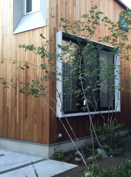 トネリコとツリバナ とレッドシダーの外壁_b0183404_22241967.jpg