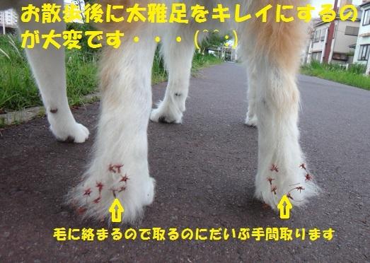 f0121712_00455426.jpg