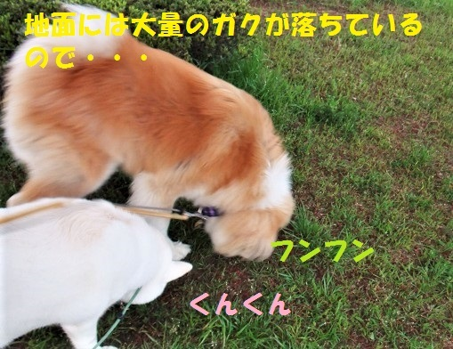 f0121712_00460176.jpg