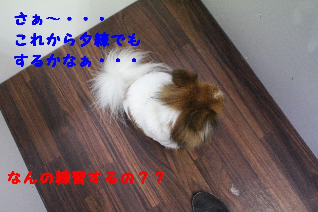 おめでとぉ~!!_b0130018_06511963.jpg