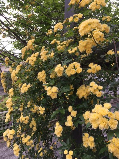 花の季節_b0038919_981940.jpg