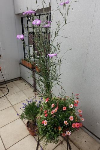 テラスを彩る花々_c0070136_10075373.jpg