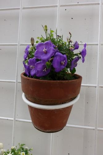 テラスを彩る花々_c0070136_10092468.jpg