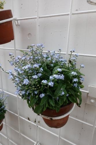 テラスを彩る花々_c0070136_10145502.jpg