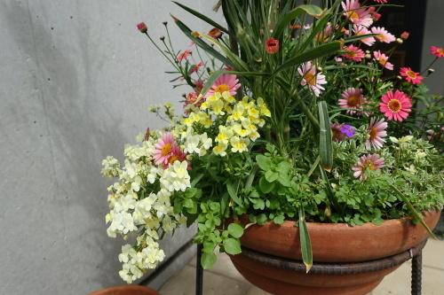 テラスを彩る花々_c0070136_10163001.jpg