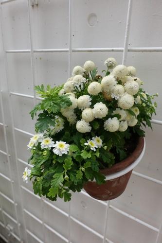 テラスを彩る花々_c0070136_10202224.jpg